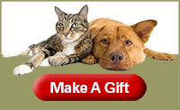 cat and dog gift box