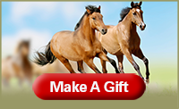 Equine Make A Gift