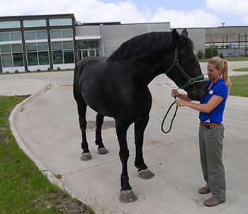 Dr. Caston with horse