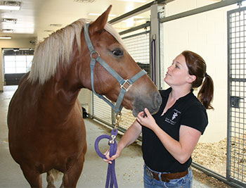 Technician Lisa with equine patient.