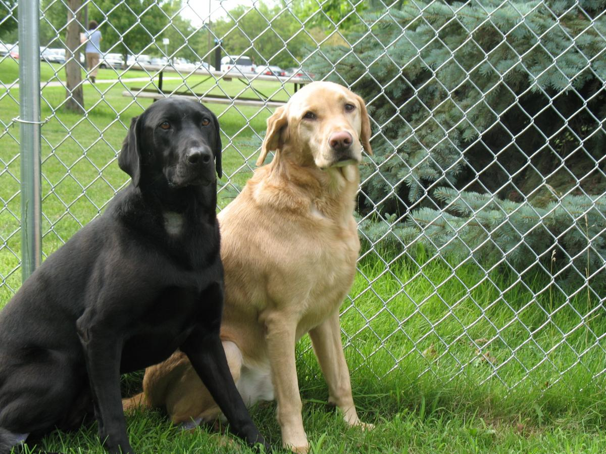stetson and wrangler-dogs