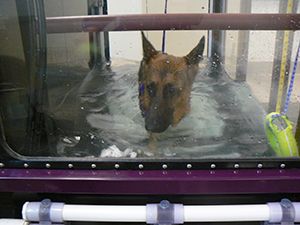 Dasani in underwater treadmill