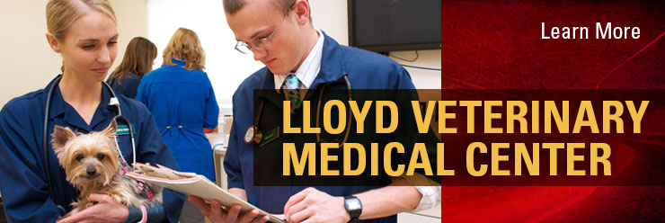Learn more about the Lloyd Veterinary Medical Center