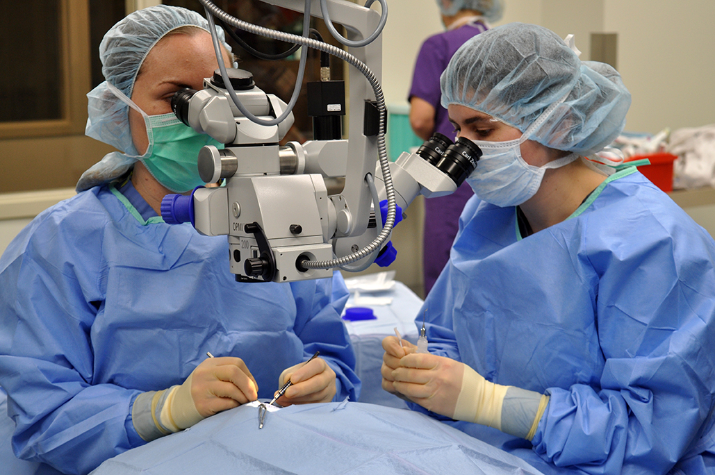 Ophthalmology Surgery