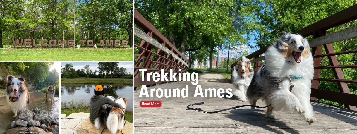 Dogs visiting Ames trails