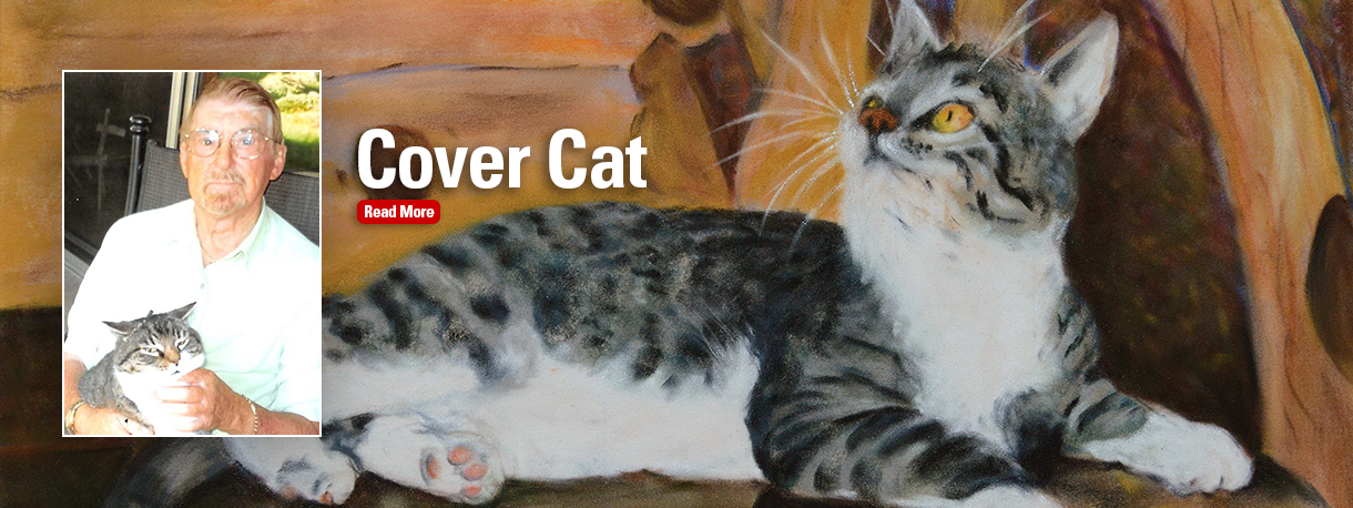 Cover cat banner