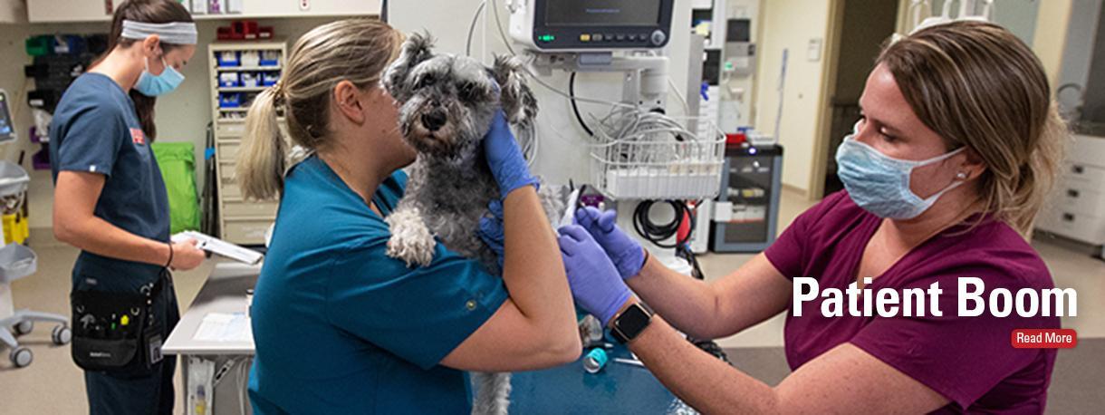 Dog exam in ICU