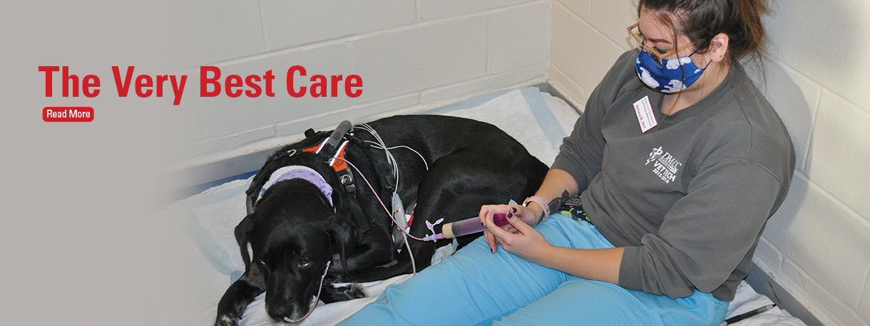 Ruthie the dog receiving care from student