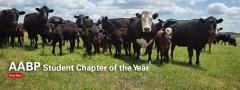 Bovine in field
