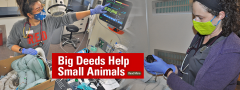 Small Animal ICU