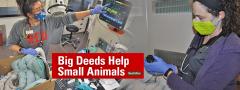 Small Animal ICU