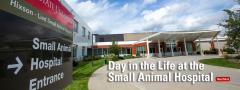 Small Animal Hospital Exterior