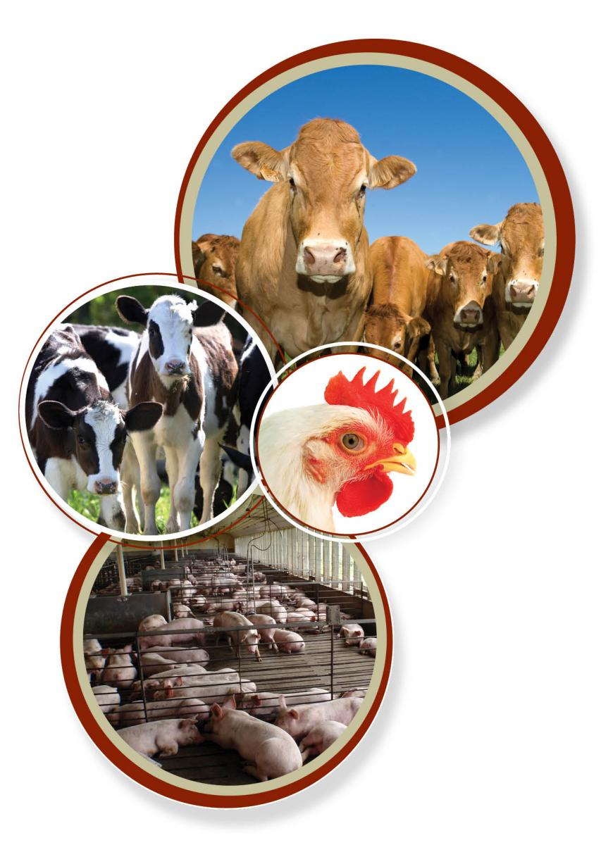 Graduate Certificate In Veterinary Preventive Medicine Iowa State