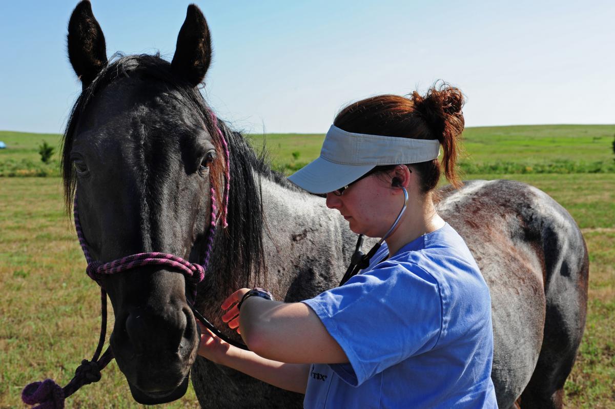 horse exam