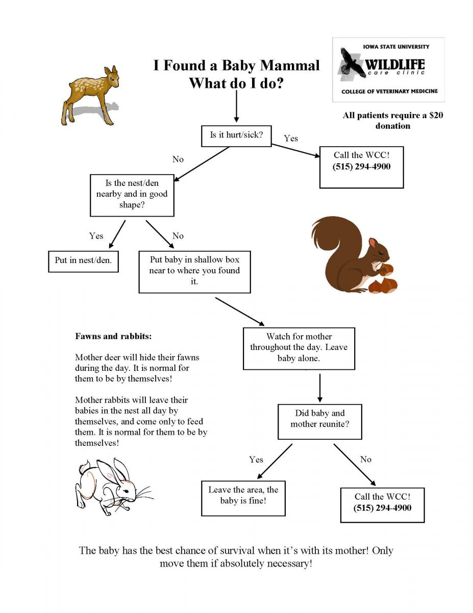 Baby Mammal Fact Sheet